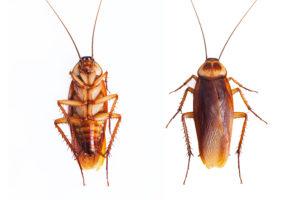 Pest control san antonio