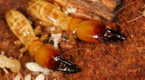 Pest Control san antonio - termite control