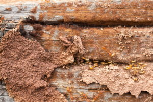San Antonio Termite Treatment