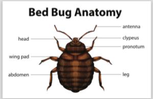 bed bug exterminators