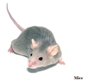 mice-rodent control san antonio