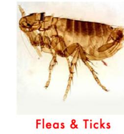 flea control in san antonio